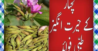 Kachnar Khane Ke Fayde in Urdu